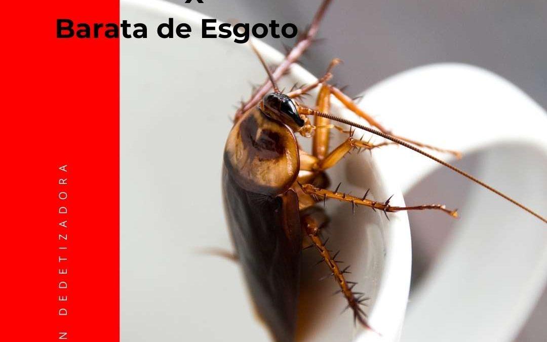 BARATAS GERMÂNICA X BARATA DE ESGOTO